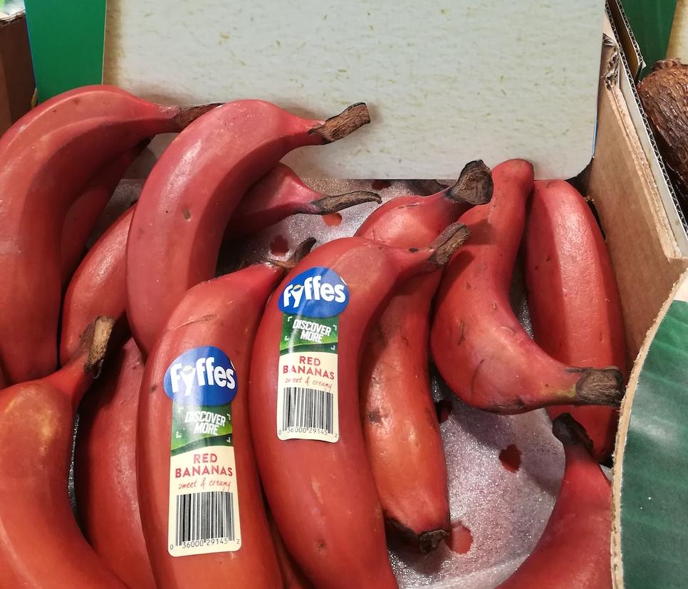 Come Coltivare Un Banano la banana rossa : fra i frutti esotici la più appariscenti